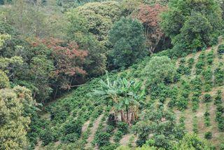 Finca de Supracafé en Cauca, Colombia