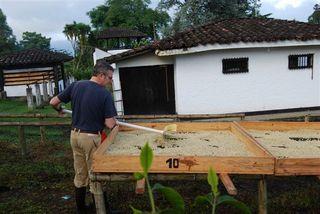 Ricardo Oteros en plena faena en el secado de café