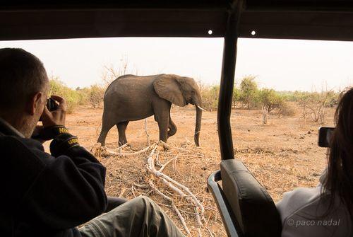 Elefantes chobe 5