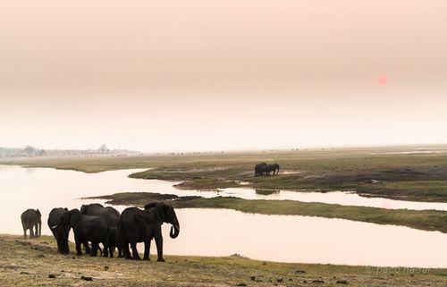 Elefantes chobe 4