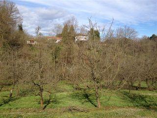 Paisaje de manzanos asturianos