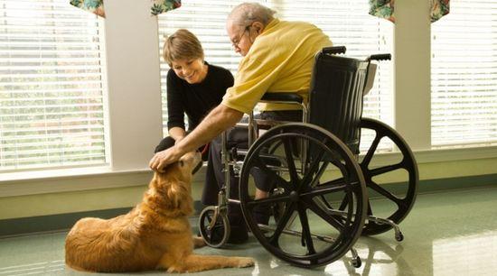 Terapia-com-animais-sus