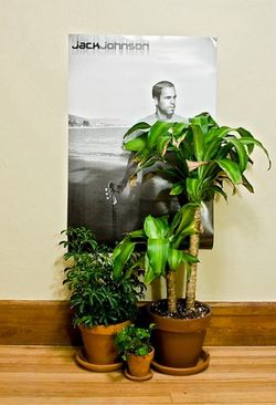 Jack Johnson hiding behind my house plants de Justin Kemp