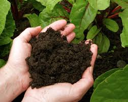 Compost 02