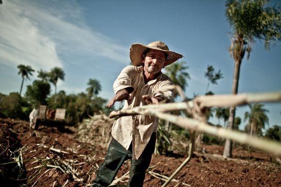 Silvestre Santacruz, productor de caña de azúcar y socio de la cooperativa Manduvirá (c) Pablo Tosco