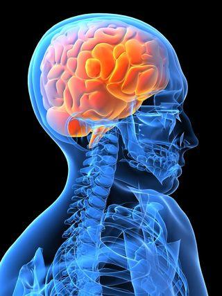 El cerebro humano, centro y motor de emociones