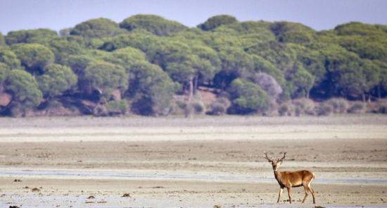Doñana conservation