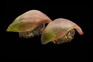 Nigiri del delicioso tomate negro de Santiago. Las lascas de tomate sustituyen al pescado y el picadillo de pescado, sustituye al arroz, un sushi tan delicioso como atrevido. Casa Marcelo (Santiago)