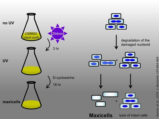 Maxicells