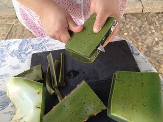 Pelando las hojas de aloe vera
