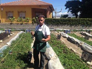 Javier Márquez, agricultor, en su semillero invernadero de Guadalix de la Sierra. Dispone de lonas y plásticos abatibles para proteger sus plantones según las condiciones ambientales