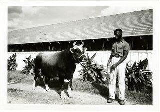Negro con animal de carga. Años 30. Parchman
