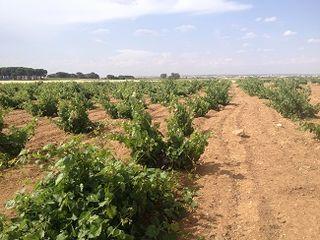 Viñas viejas de Aurum Red