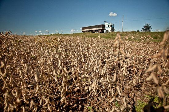 Plantación de soja (c) Pablo Tosco