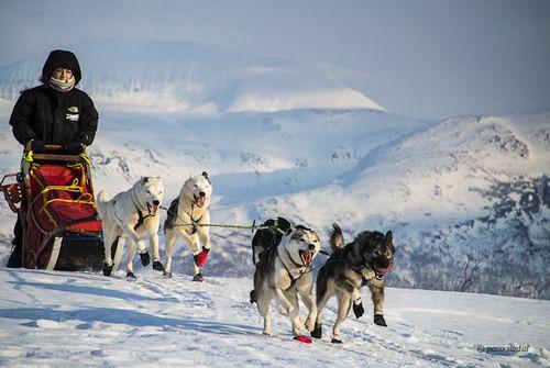 Trineo de perros Laponia-Paco Nadal