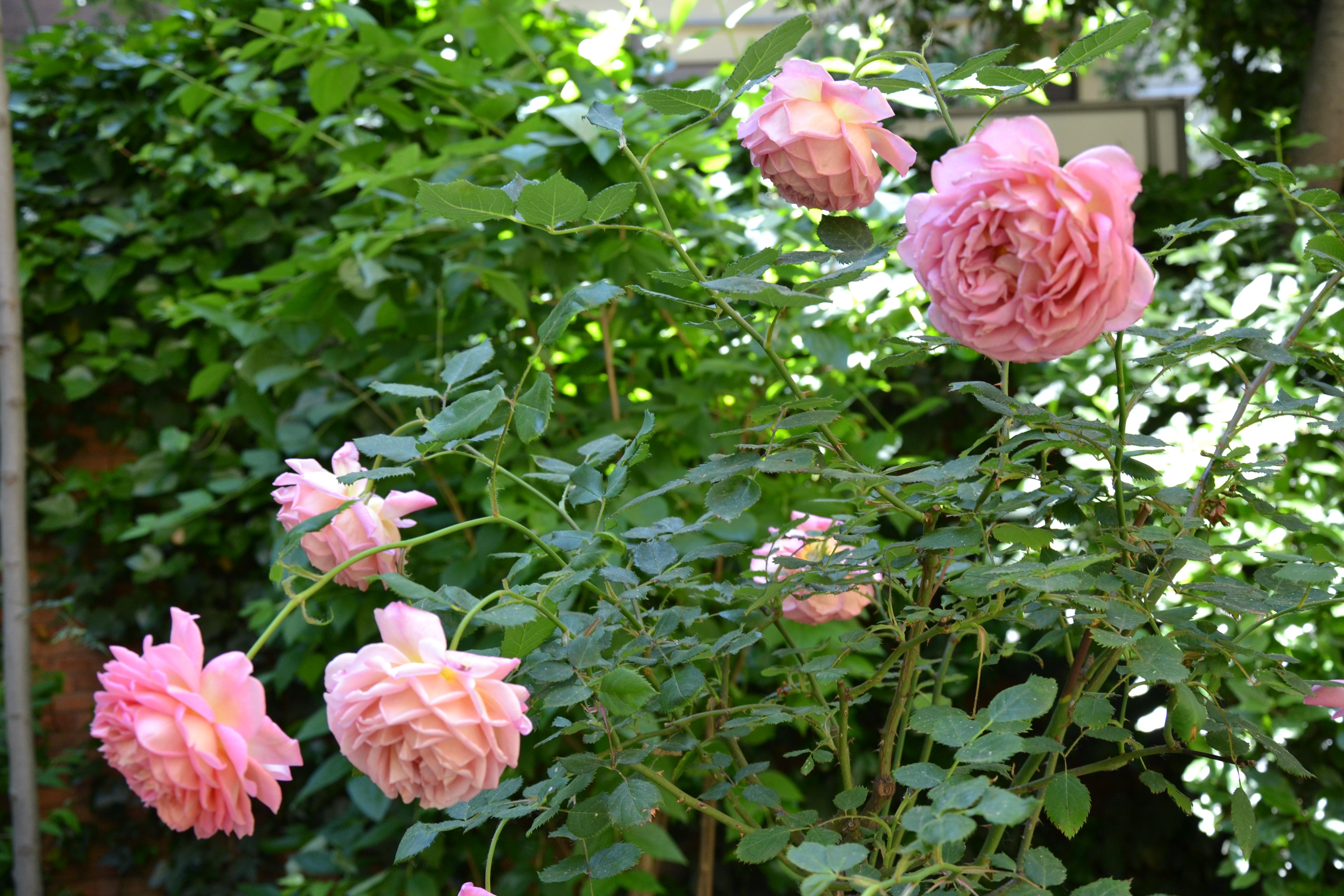 En el jardín de Sorolla >> De flor en flor >> Blogs EL PAÍS