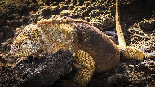Galápagos 7