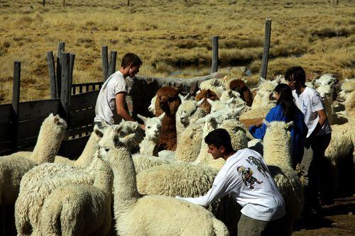 0782_28_JUN_Reserva Nacional Salinas y Aguada Blanca