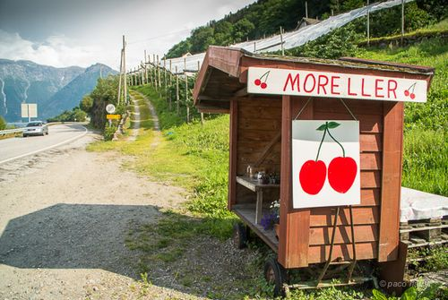 Quiosco de cerezas Noruega