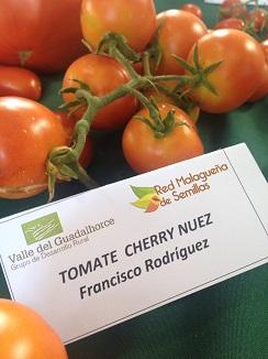 Tomate cherry nuez