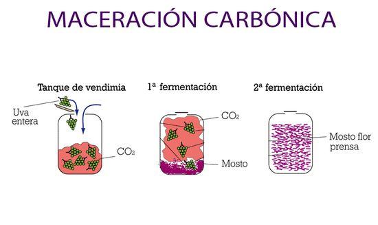 Maceración carbónica