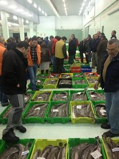 Compradores observando el pescado antes de la subasta