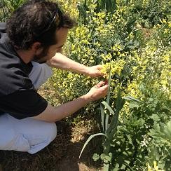 Dani Ochoa recogiendo inflorescencias de brécol en el huerto de El Escorial, que luego incorpora a sus platos. Sabor vegetal muy suave