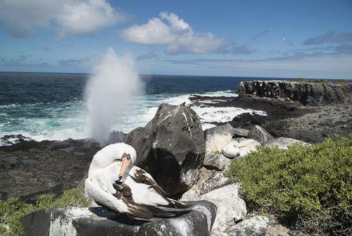 Manual de instrucciones para visitar las islas Galápagos >> Paco Nadal >> El Viajero >> Blogs EL PAÍS