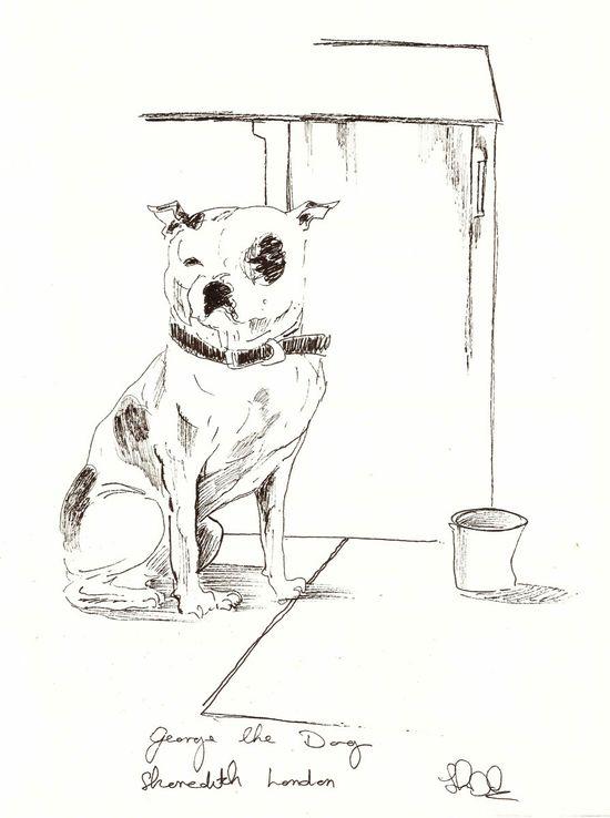 John Dolan - George The Dog Drawing-9