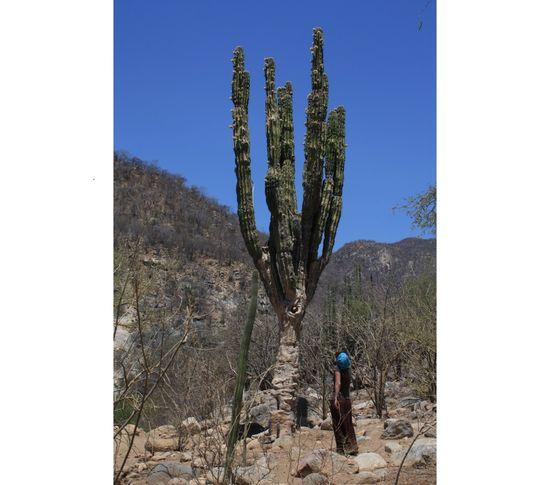 Baja California0025