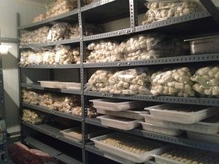 Cámaras repletas de croquetas congeladas