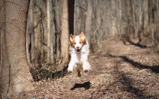 Perro super feliz