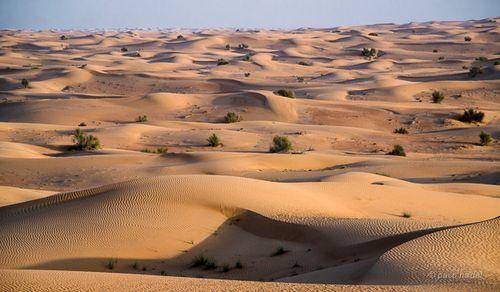 Dubai: el mayor contraste del mundo >> Paco Nadal >> El Viajero >> Blogs EL PAÍS