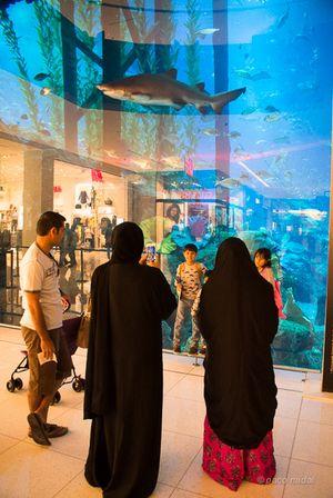8. Acuario de Dubai-Paco Nadal