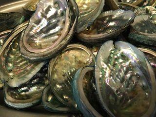 Conchas de abalones