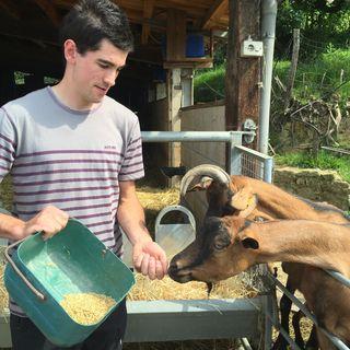 Kepa dando de comer a sus cabras