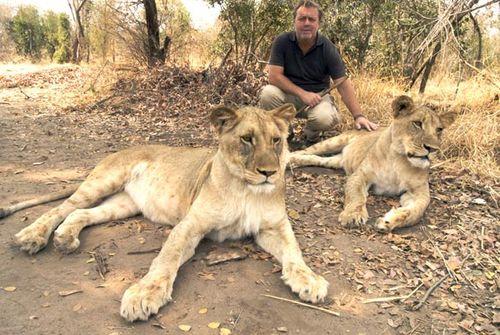Caminando con leones en Antelope Park 1