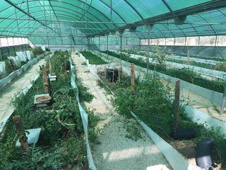 Granja de caracoles en Villanueva del Trabuco