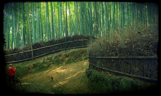 Bosque de bambú de Sagano Isidoro Merino