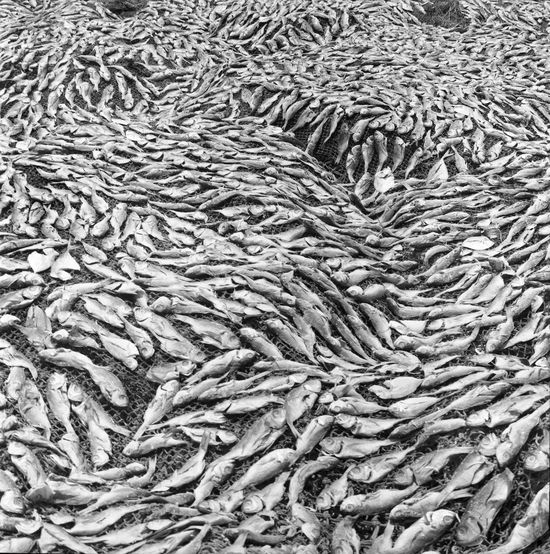 3. Drying fish on the beach at Ilha