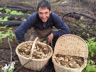 Eduardo Antón con su cosecha de colmenillas