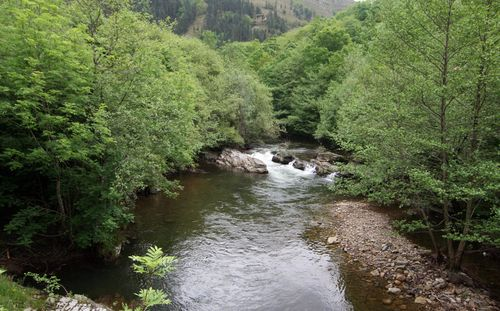 Río Saja 2