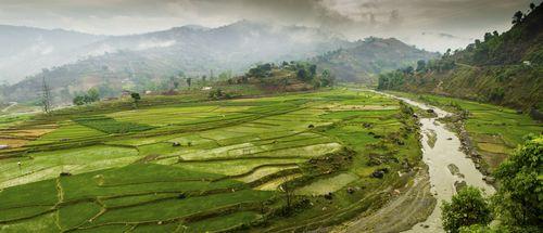 Arrozales de Nepal