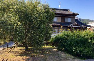 CASA JAPONESA CON OLIVOS EN FLOR EN LA ISLA DE SHODOSHIMA