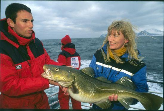 Pescado con un bacalao de temporada ( skrei) , capturado en el Ártico, junto a la isla de Senja en el norte de Noruega Isidoro Merino