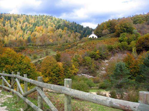 Selva Iriati