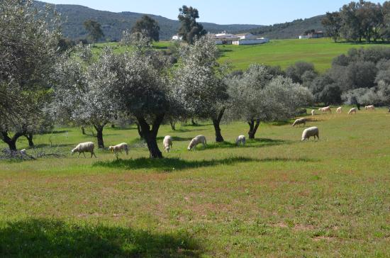 Finca agroecológica Guindalejo Ciudad Real