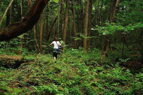 1280px-Aokigahara_forest_03 Ajari Wiki