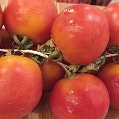 Ramillete de tomates de colgar, Justo en temporada