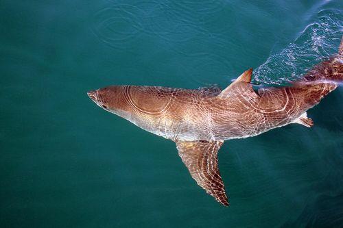 Buceo con tiburones 4